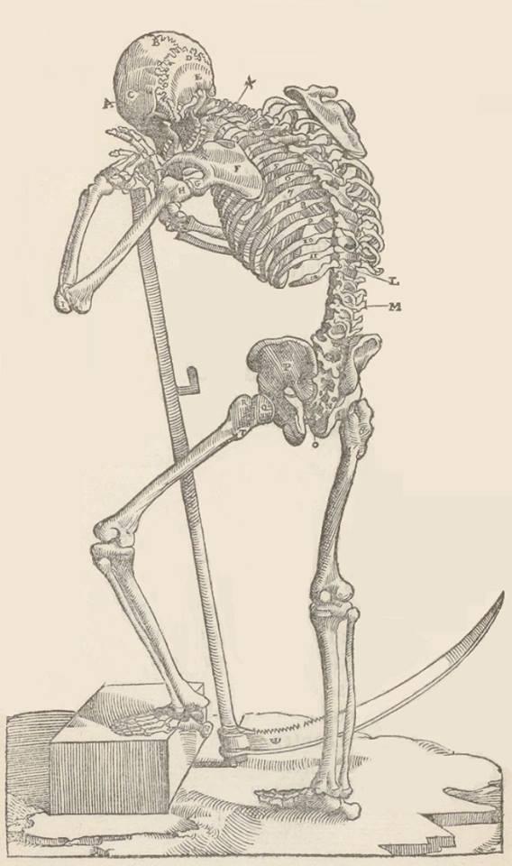 Скелет с обозначением костей, переломы которых разбираются в руководстве Амбруаза Паре по хирургии. Иллюстрация к изданию 1564 года.