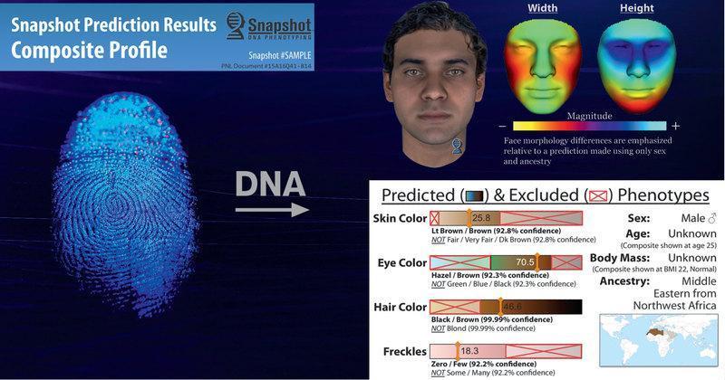 Результат ДНК-фенотипирования с помощью PN Snapshot: полиция получает краткое описание внешности человека, включая цвет его кожи, глаз и волос, наличие веснушек, форму лица, происхождение и т. д. В некоторых случаях удается даже выяснить приблизительный возраст и телосложение.