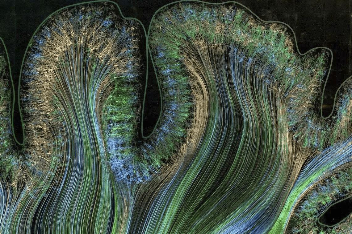 Задняя теменная кора, участок, отвечающий за движение и ощущение