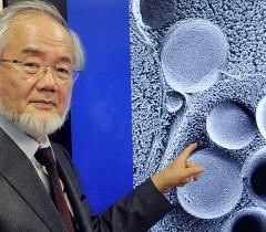 молекулярный биолог Ёсинори Осуми