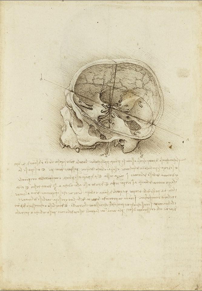 Леонардо да Винчи, Череп разделен по вертикали и горизонтали (1489, Windsor Castle, Royal Library, Royal Collection Trust, 19058r) Leonardo's philosophical anatomies The Lancet, 393 (2019) 1404-1408. doi:10.1016/S0140-6736(19)30584-7